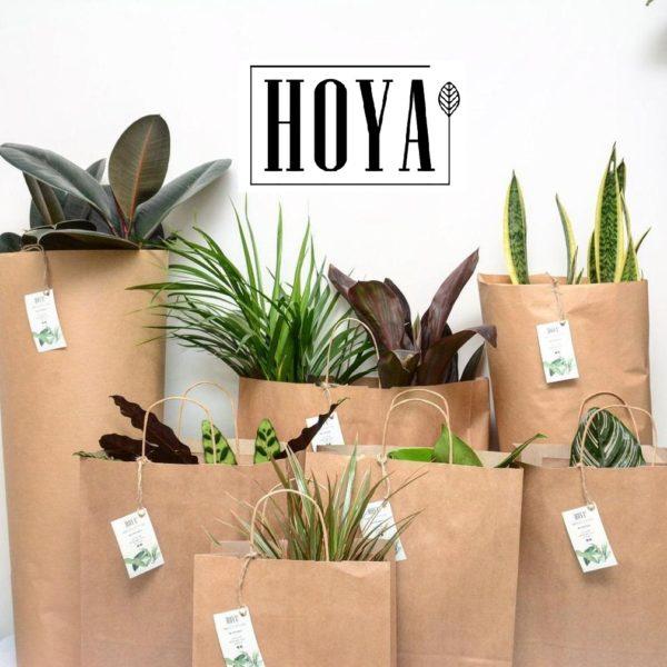 צמחים בקליק לבית